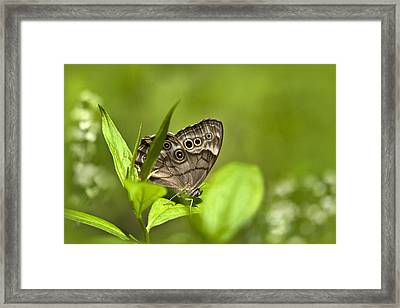 Meadow Butterfly Framed Print by Christina Rollo