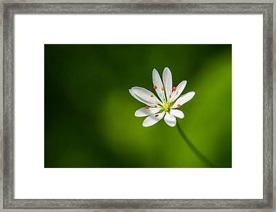 Meadow Candy - Featured 3 Framed Print by Alexander Senin
