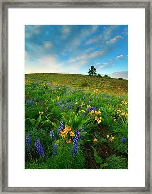 Meadow Gold Framed Print by Mike  Dawson