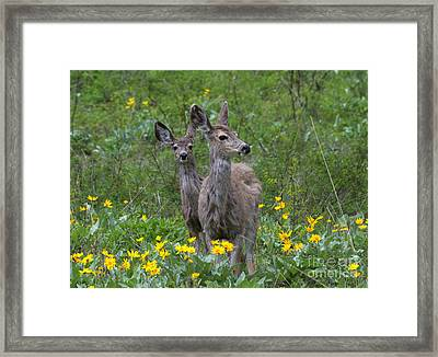 Meadow Meal Framed Print by Mike  Dawson