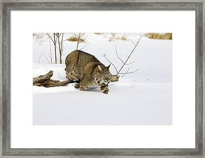 Meander Framed Print by Jack Milchanowski