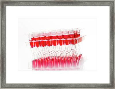 Medical Samples In A Test Tube Rack Framed Print by Wladimir Bulgar