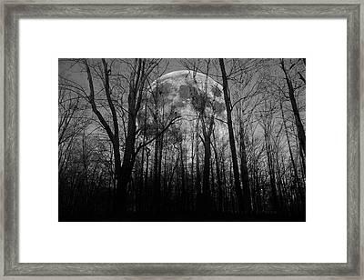 Meditative Forest Wanderer  Framed Print by Betsy C Knapp