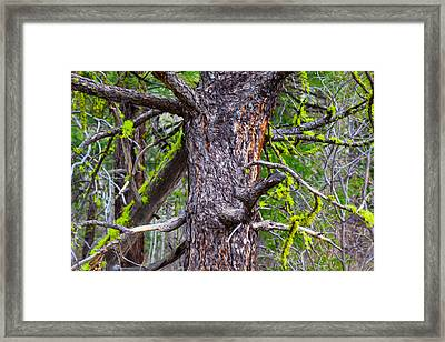 Medusa Tree Framed Print by Omaste Witkowski