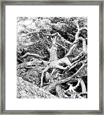 Medusa Tree Roots Framed Print by Brian Sereda