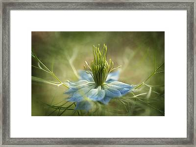 Medussa Framed Print by Faith Simbeck
