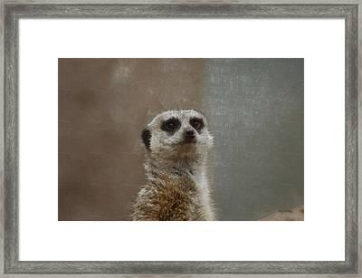 Meerkat 5 Framed Print by Ernie Echols