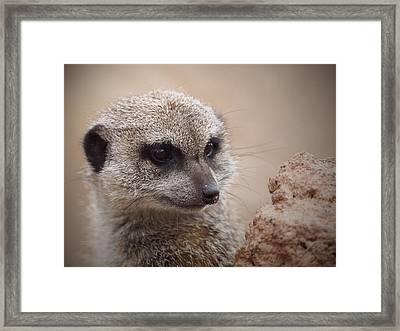 Meerkat 7 Framed Print by Ernie Echols