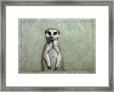 Meerkat Framed Print by James W Johnson