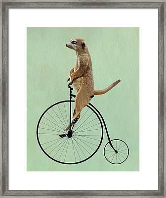 Meerkat On A Black Penny Farthing Framed Print by Kelly McLaughlan