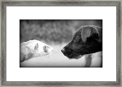 Meet And Greet Framed Print by Nigel Espley
