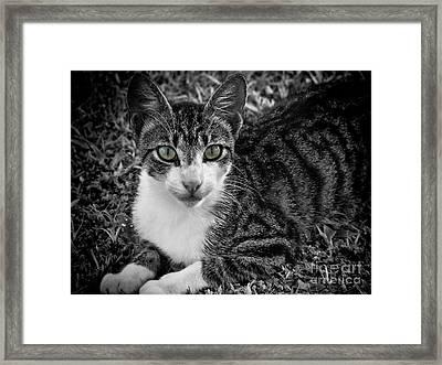 Meet George Again Framed Print by Karen Lewis