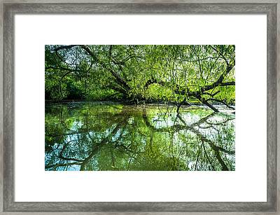 Meeting A Willow Tree In The Evening Framed Print by Ellie Teramoto