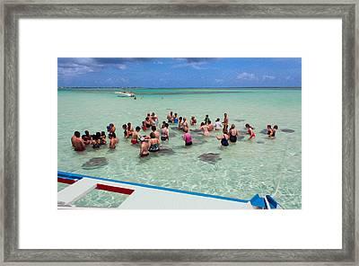 Meeting The Stingrays Framed Print by John M Bailey