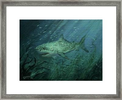 Megadolon Shark Framed Print by Tom Shropshire