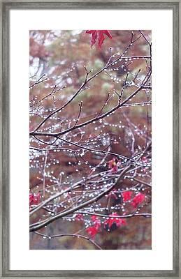 Meiosis Framed Print by Arielle Cunnea