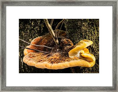 Mellow Mushroom Framed Print by Karen Wiles