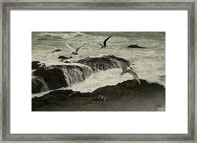 Seashore Memorial  Framed Print by Schwartz