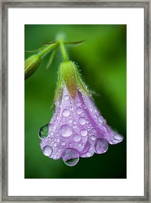 Memories Of Rain Framed Print by Jenny Rainbow