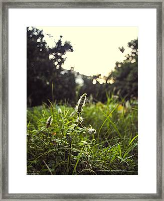 Menthe Framed Print by Diaae Bakri