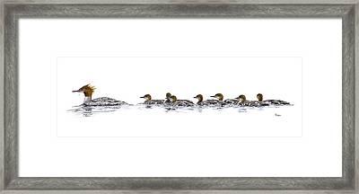 Merganser Family Framed Print by Brent Ander