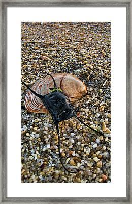 Mermaids Purse Framed Print by Heather Applegate