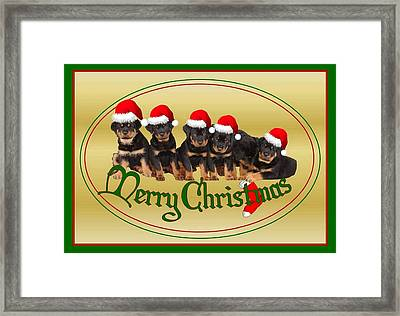 Merry Christmas Rottweiler Puppies Greeting Card Framed Print by Tracey Harrington-Simpson