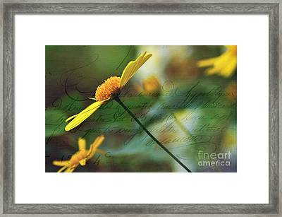 Message In A Daisy Framed Print by Kaye Menner