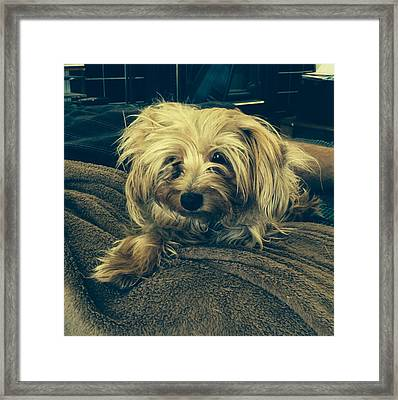 Messy  Framed Print by Laurie Search