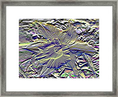 Metal Daffodil Framed Print by Patrick J Murphy