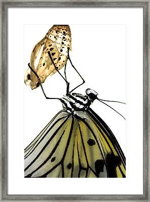 Metamorphosis Framed Print by Roeselien Raimond