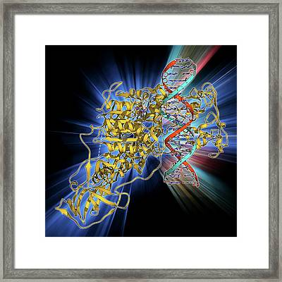 Methyltransferase Complexed With Dna Framed Print by Laguna Design