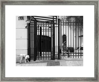 Meu Territorio - My Territory Framed Print by Julie Niemela
