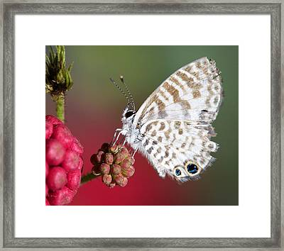 Miami Blue 20x24 Framed Print by Pamela Gail Torres