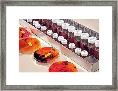 Microbiology Analysis Framed Print by Public Health England