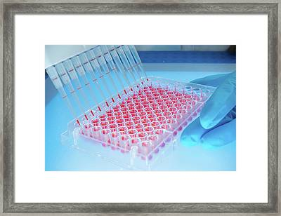 Microbiology Samples In Multiwell Tray Framed Print by Wladimir Bulgar