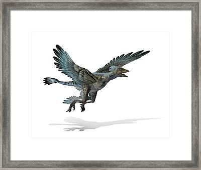 Microraptor Dinosaur Framed Print by Mikkel Juul Jensen