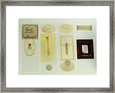 Microscope Slides Framed Print by Science Photo Library
