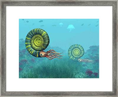 Middle Jurassic Ammonites Framed Print by Walter Myers