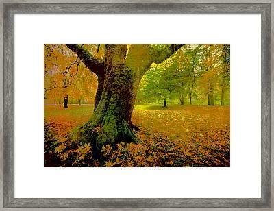 Autumn Splendor Framed Print by Bonnie Bruno