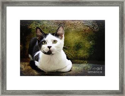 Mika Framed Print by Ellen Cotton