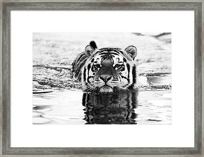 Mike Framed Print by Scott Pellegrin