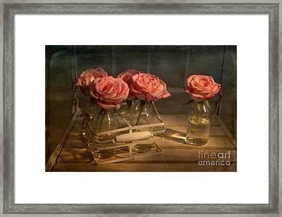 Milk Bottle Roses Framed Print by Ann Garrett