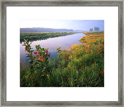 Milk Weed Morning Framed Print by Ray Mathis