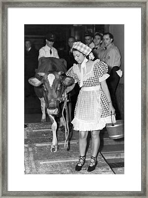 Milking Cow In New York Hotel Framed Print by Underwood Archives