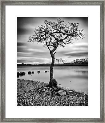Millarochy Tree Loch Lomond Framed Print by John Farnan