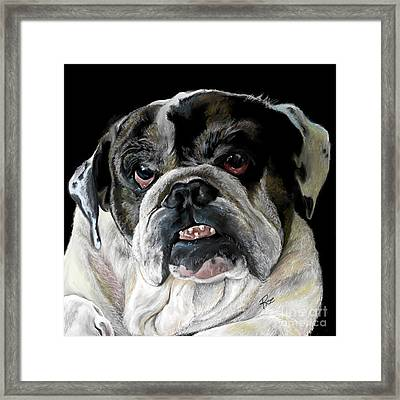 Millie The Bulldog Framed Print by Maria Schaefers