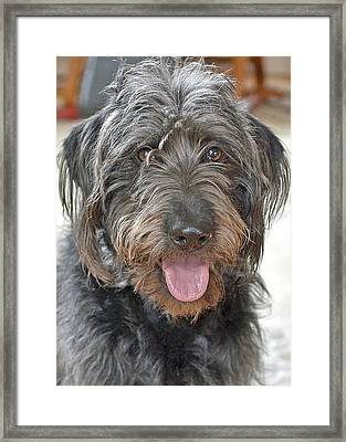 Milo Framed Print by Lisa Phillips