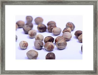 Mimetes Stokoei Seeds Framed Print by Cordelia Molloy