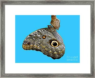 Mindo Butterfly Framed Print by Al Bourassa